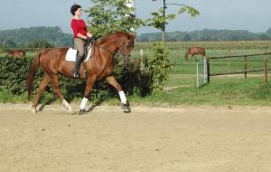 reitschule-niederrhein-training-03
