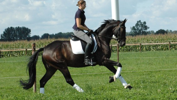 reitschule-niederrhein-training-04